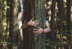 Prendre un arbre dans ses bras